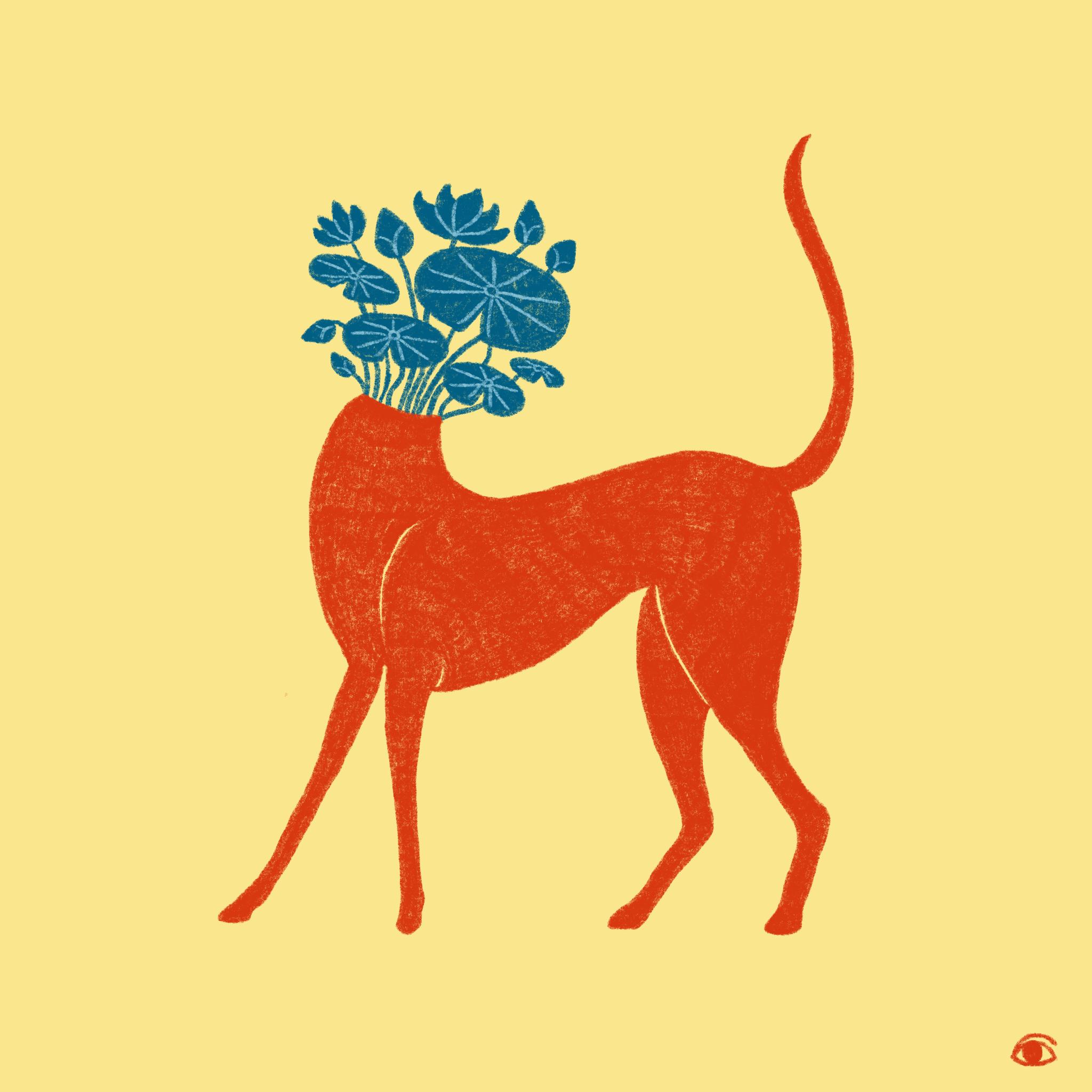 Orange Greyhound Plant